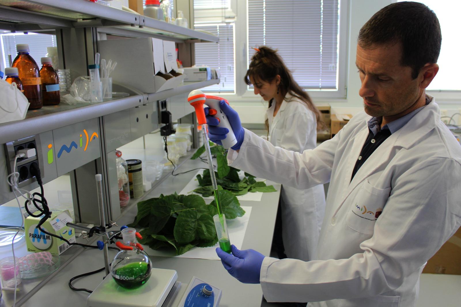 Investigadores del IMIDA, durante las labores de trabajo en laboratorio con hojas de morera. Imagen: CARM