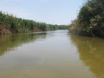 La Comunidad intervendrá en el hábitat de Las Moreras -en la fotografía- para mejorar el hábitat. Imagen de archivo: CARM