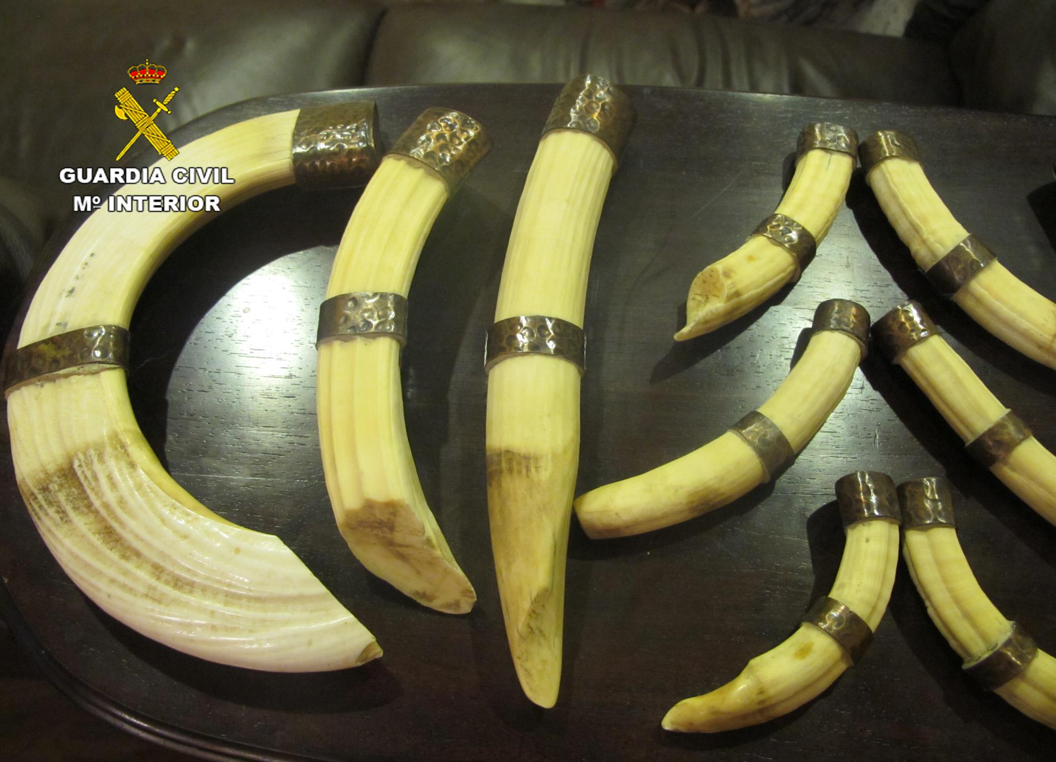 Más colmillos de elefante. Imagen: Seprona