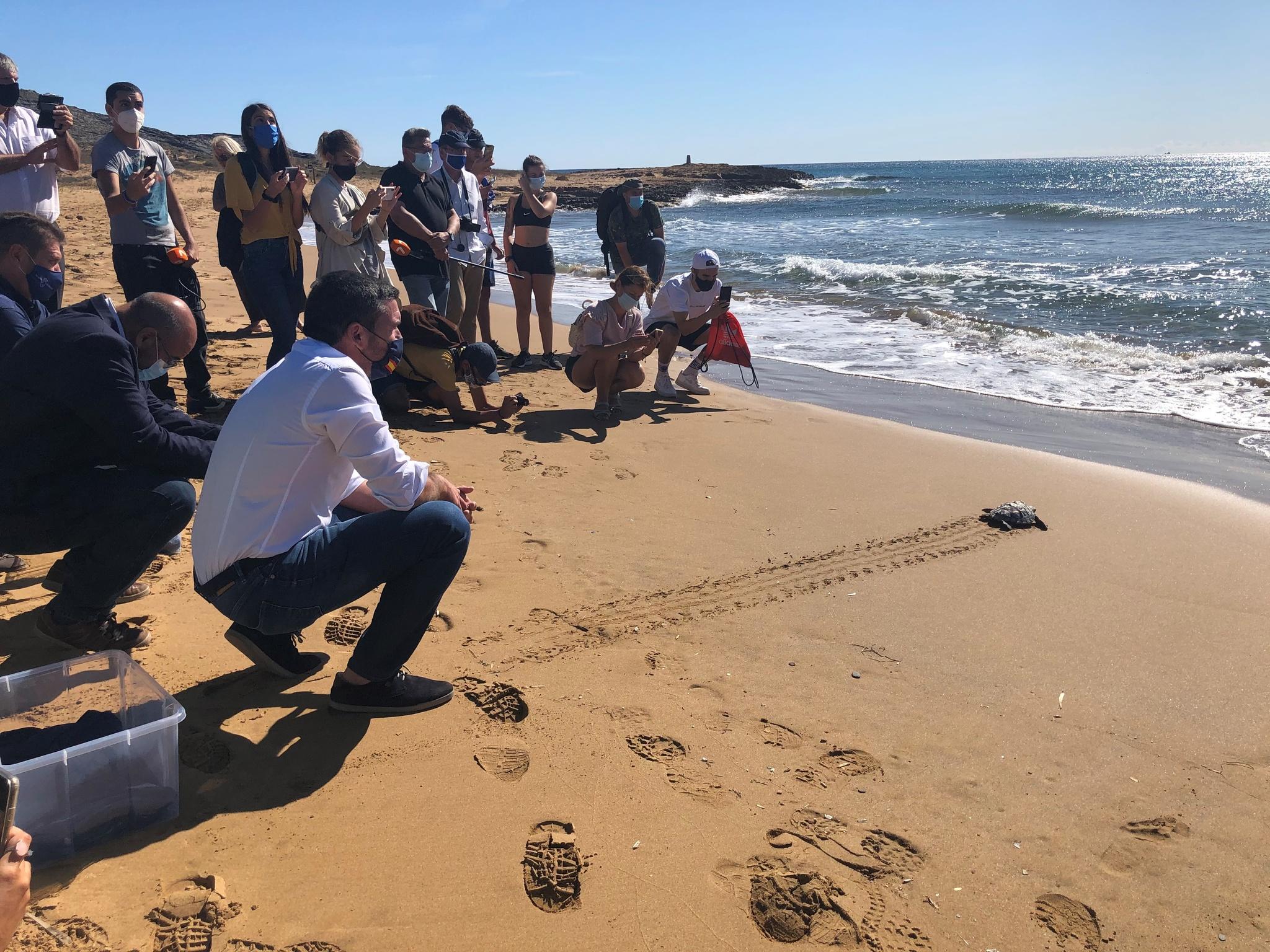 El consejero Antonio Luengo durante la liberación de una de las diez tortugas boba nacidas el verano de 2019 en Calblanque. Imagen: CARM