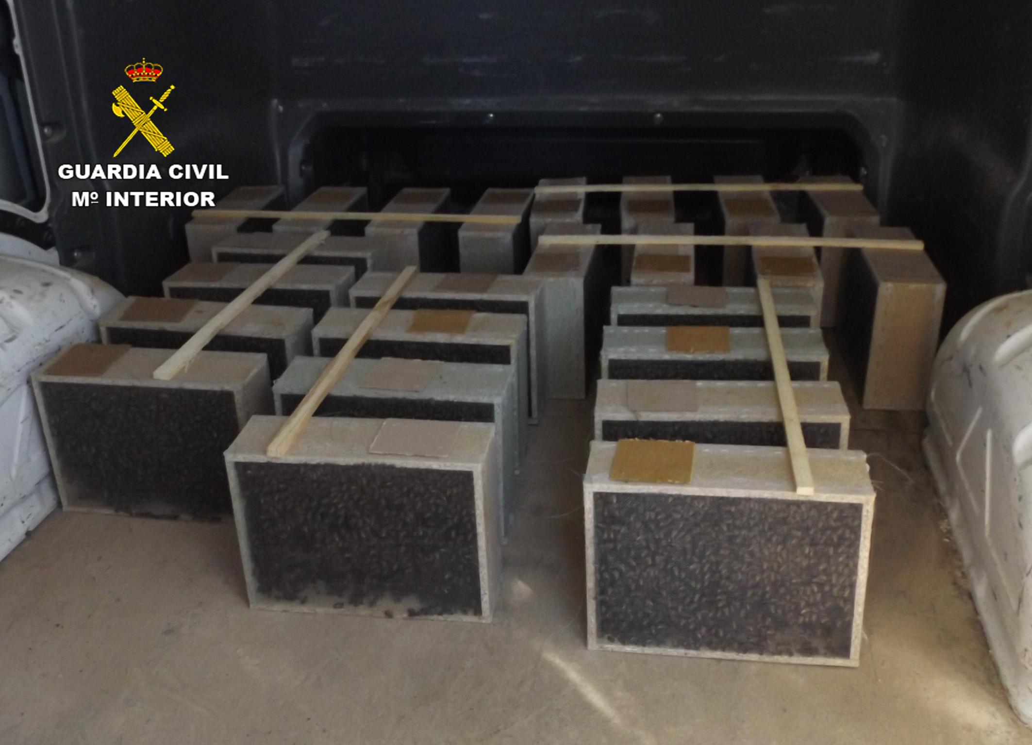 El autor introducía la población de abejas sustraída en numerosas cajas realizadas artesanalmente con madera y rejillas de ventilación. Imagen: Guardia Civil