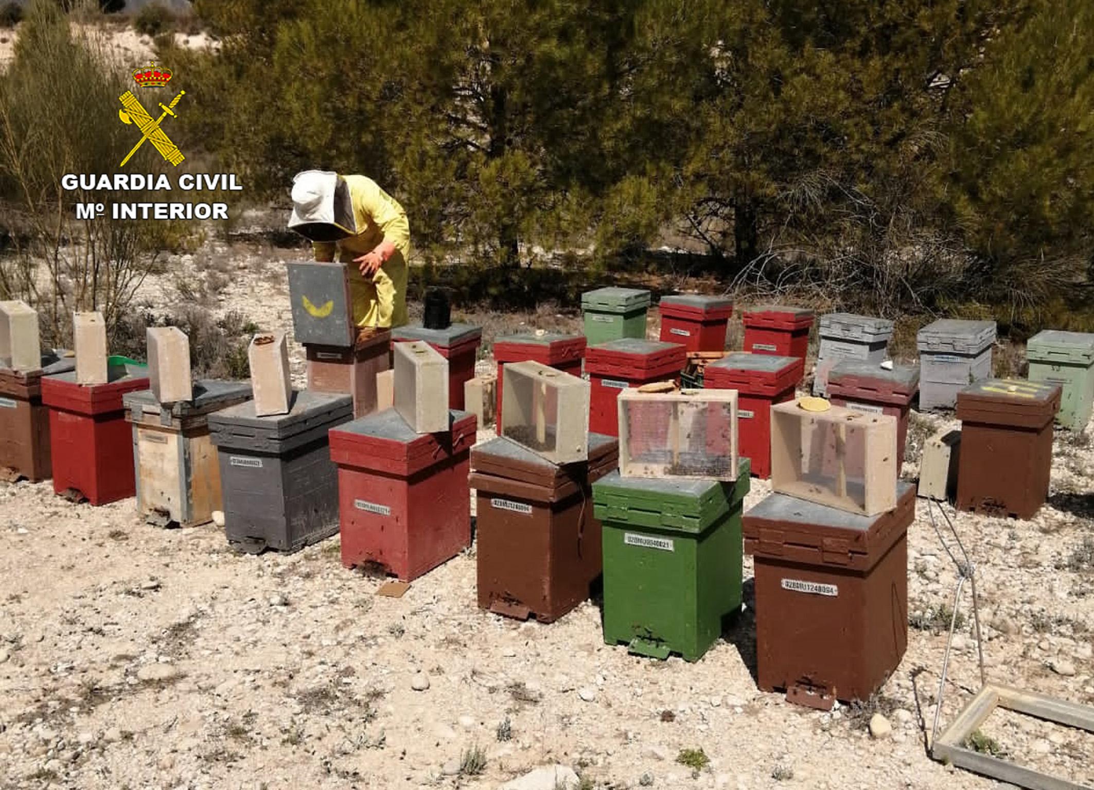 La idea era la comercialización ilícita de estas abejas en otras provincias españolas. Imagen: Guardia Civil