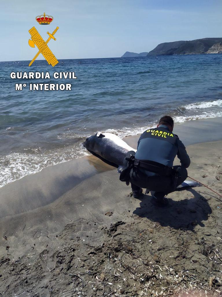 En caso de varamiento, contactar con 112 ó 062 lo más rápido posible. Imagen: Guardia Civil