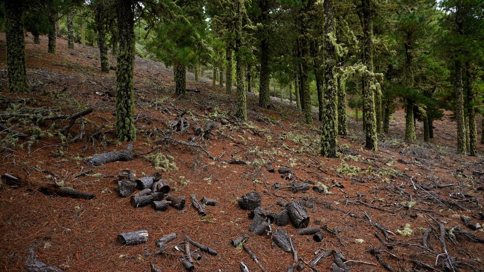 La deforestación mundial tiene impactos que genera en la pérdida de biodiversidad y el cambio climático. Imagen: Miteco