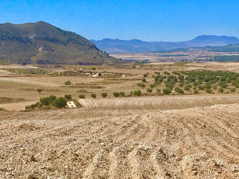 Zona donde se ubicaría la explotación porcina en Zarcilla de Ramos. Imagen: Acude