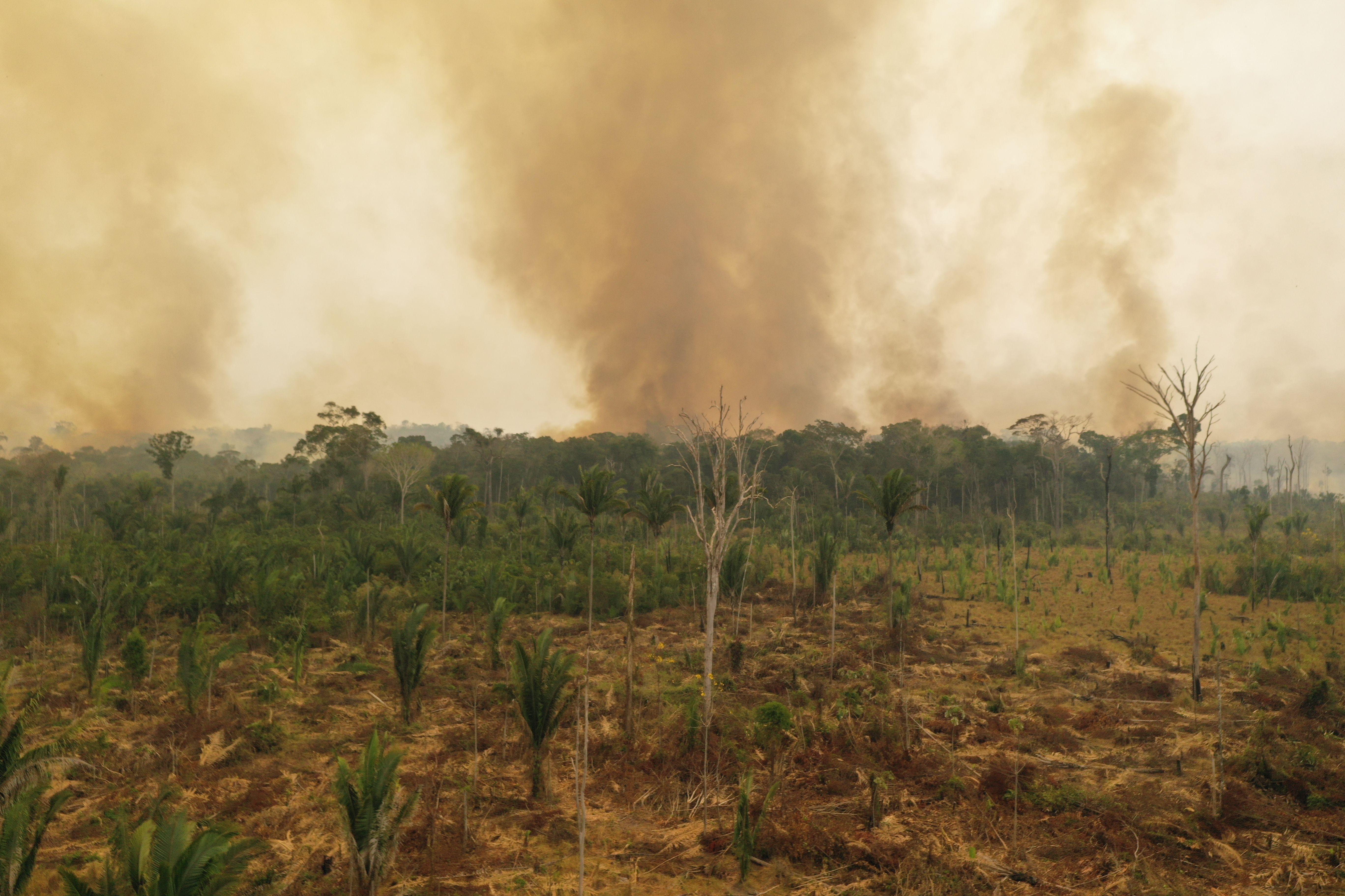 Amazonía, Porto Velho, agosto 2019. Imagen: Michael Dantas / WWF