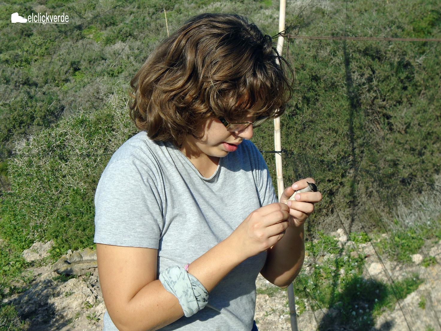 La voluntaria Ana Jara lee la anilla de un pájaro tras soltarlo de la red.