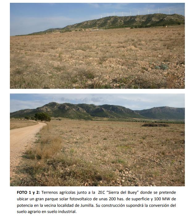 Proyecto sobre suelo forestal. Imagen extraída del informe con las propuestas de Anida Yecla
