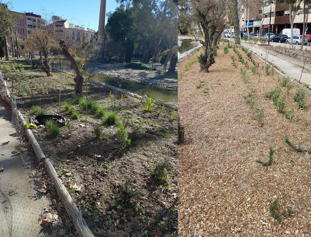 Utilización del triturado de poda. Imagen: Ayto. de Murcia
