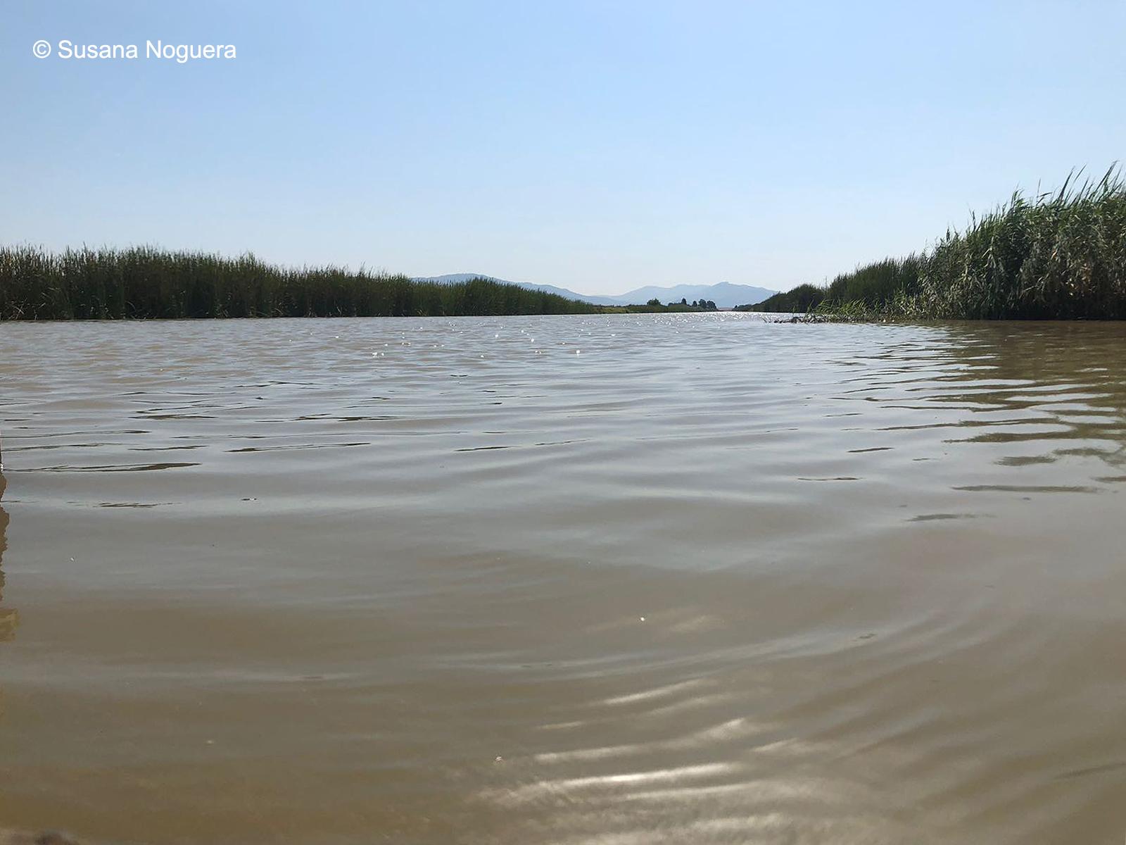 Canal de la zona de La Janda. Imagen: Susana Noguera