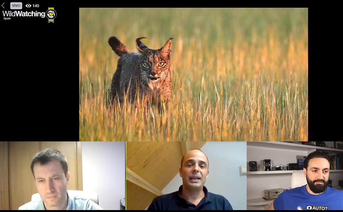 Un momento de la charla online de WildWatchin Spain sobre el lince. En el centro, Ramón Pérez de Ayala, flanqueado por Iñaki Reyero y Néstor Rodan, de la agencia de turismo de observación