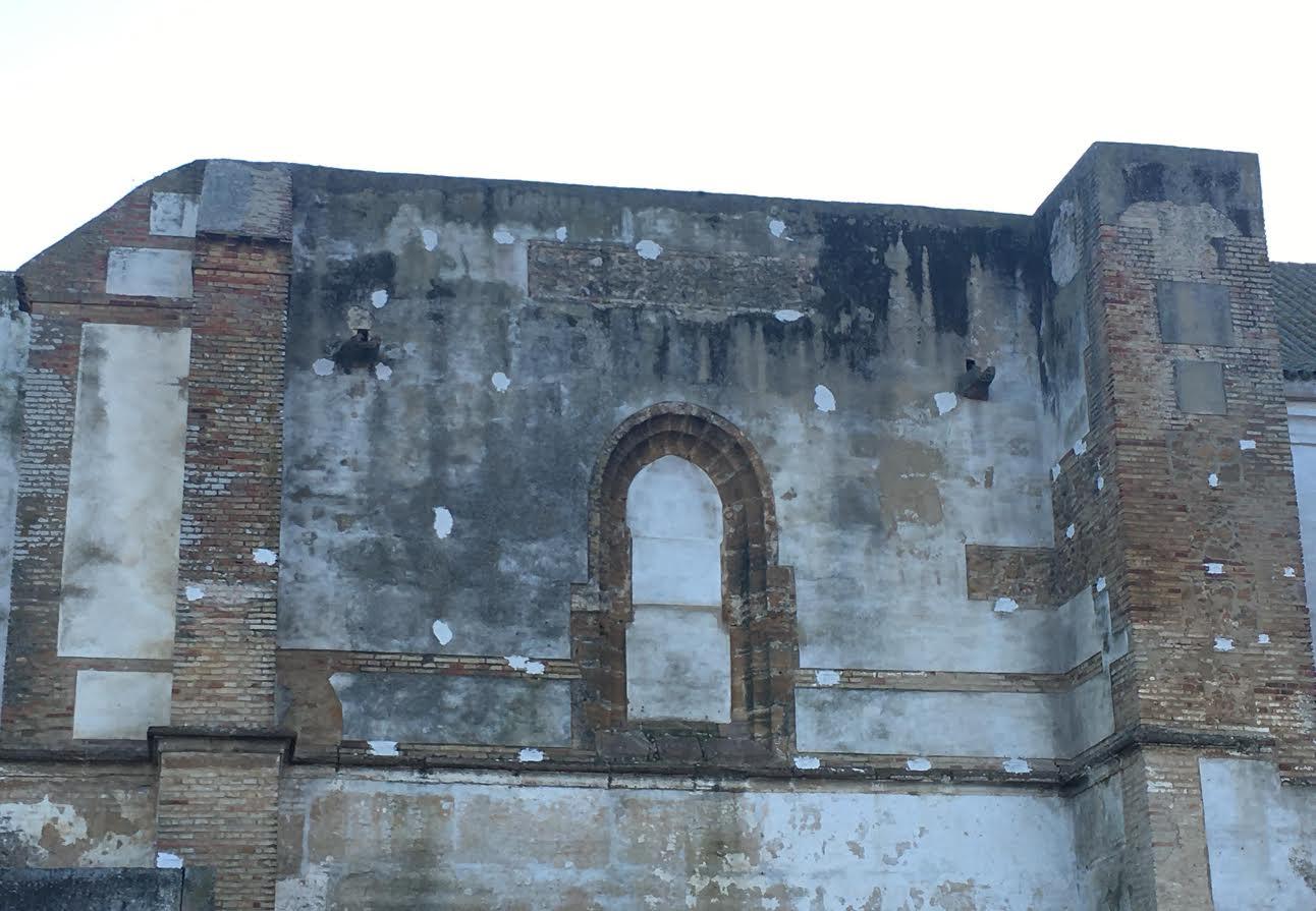 Iglesia de Santa Ana, en Carmona (Sevilla). Los mechinales (huecos) donde crían los cernícalos primilla aparecen sellados. Imagen: Ana Maqueda