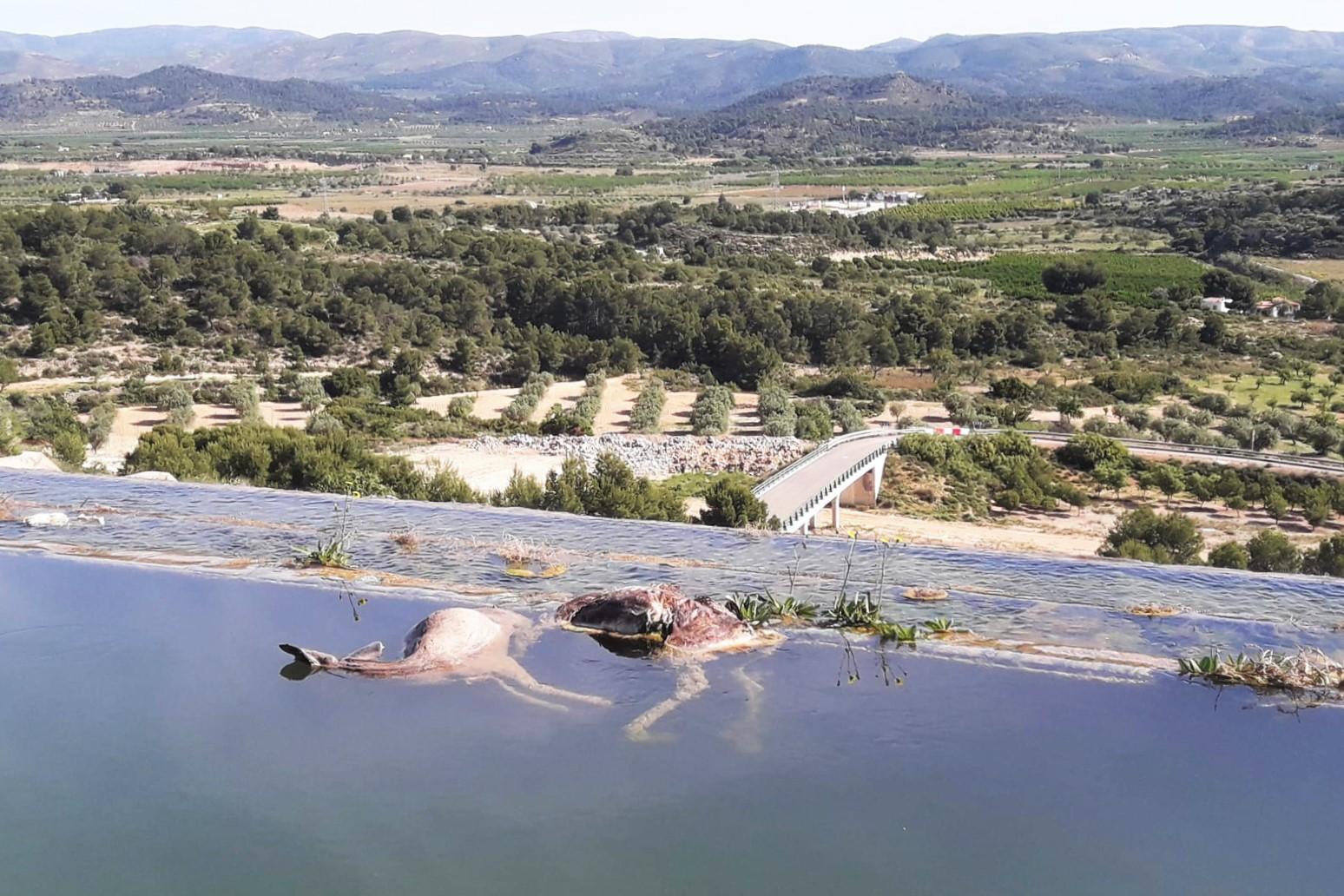 Corzos ahogados en el canal del Turia. Imagen: Adensva