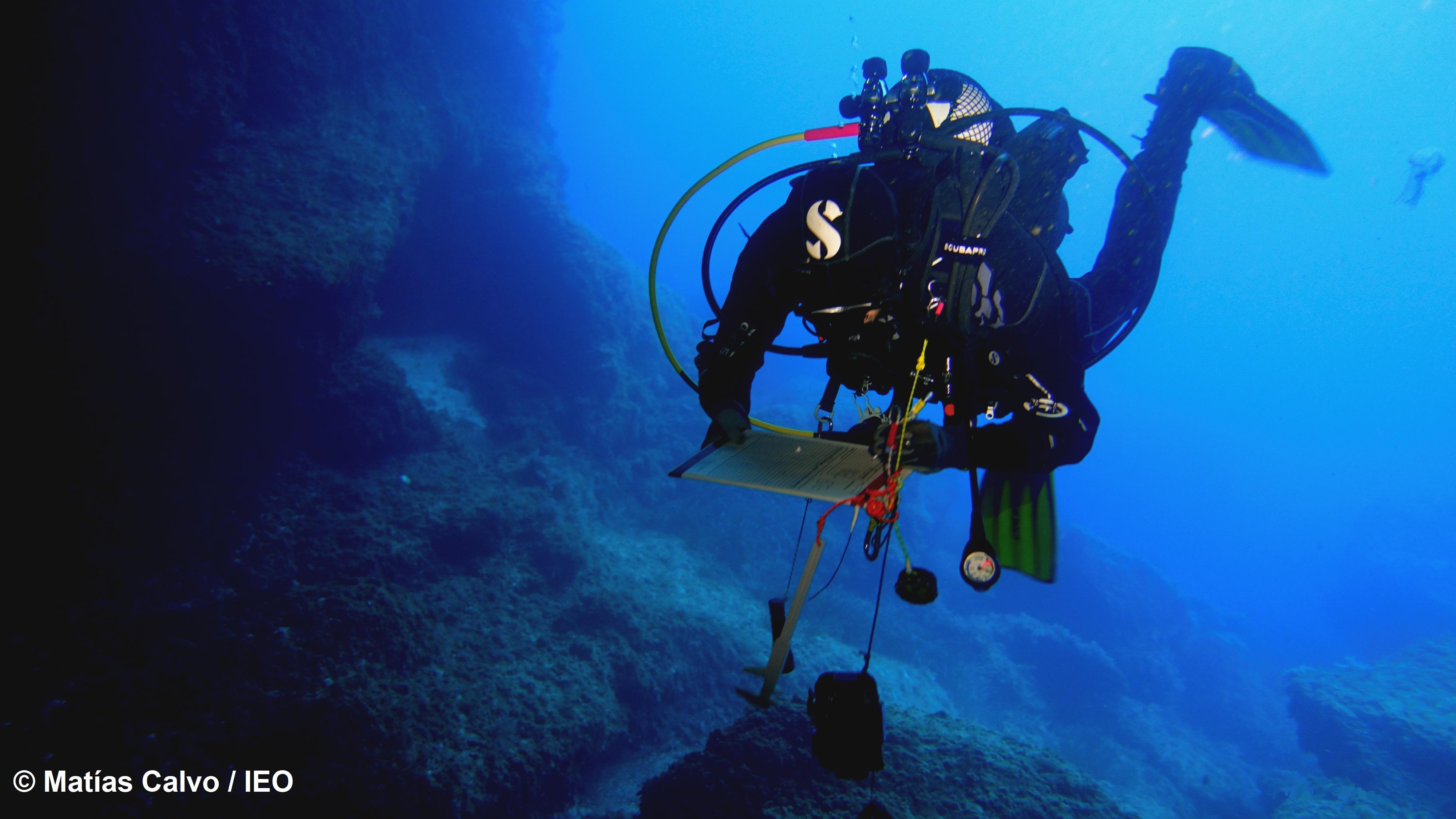 Los investigadores llevarán a cabo una serie de campañas donde se evaluarán la abundancia, la demografía y dinámica de especies frágiles y estructurales como esponjas, corales y briozoos, entre otras. Imagen: IEO