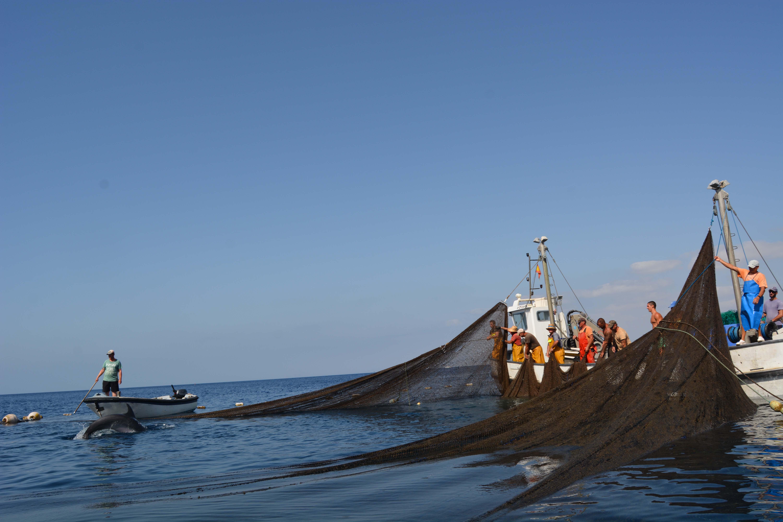 Los cetáceos fueron liberados por el personal de la empresa sin que sufrieran daños aparentes. Imagen: P. García / ANSE