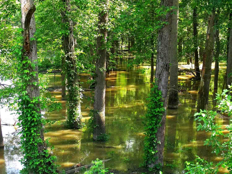Un ecosistema inundado. Imagen: CSIC