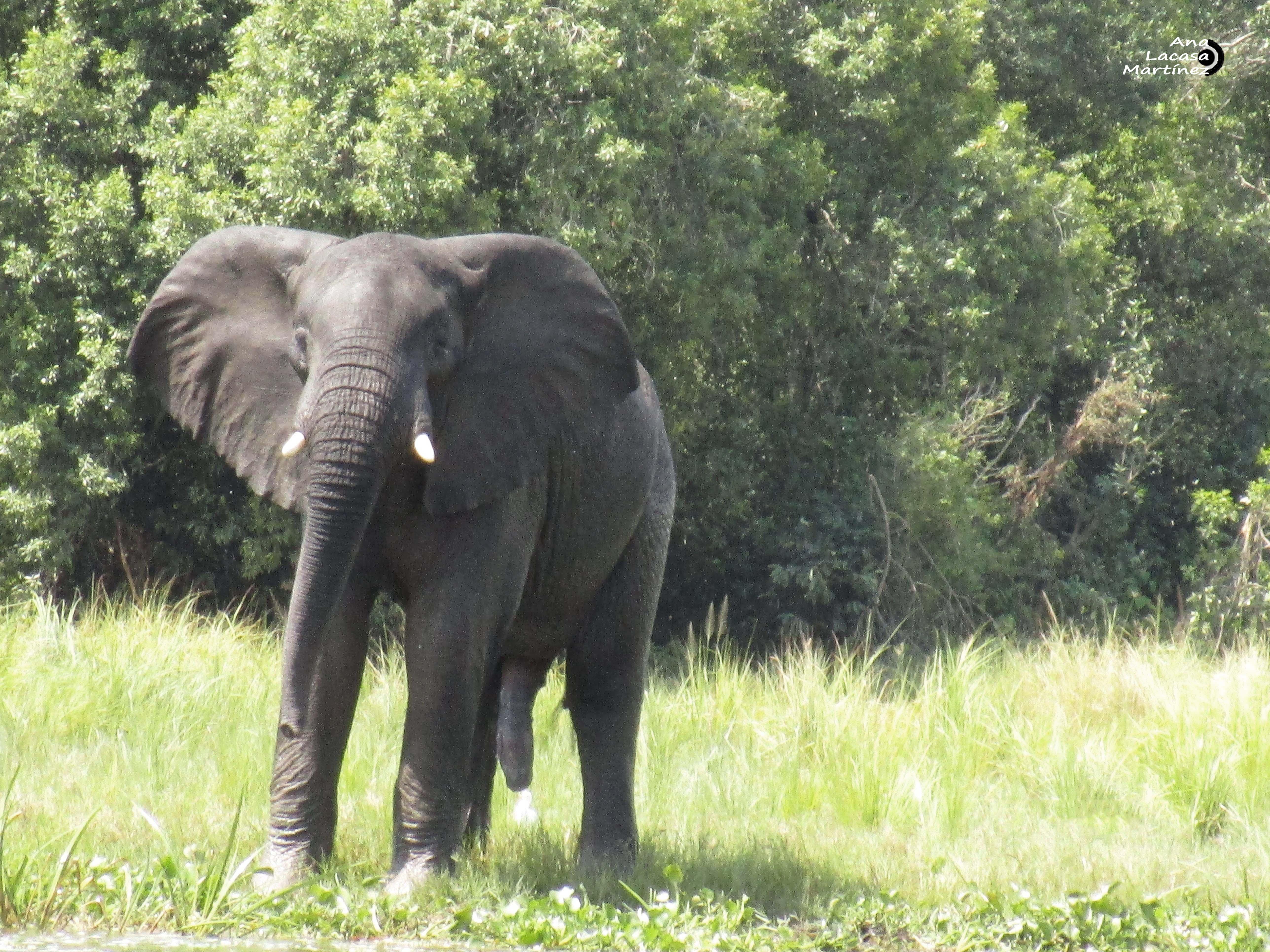Y un tercer elefante, en todo lo suyo