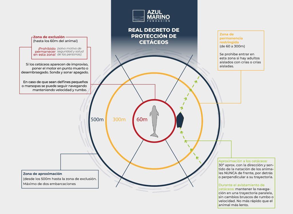 Esquema de la normativa estatal que regula el avistamiento de cetáceos. Imagen: Fundación Azul Marino / ANSE