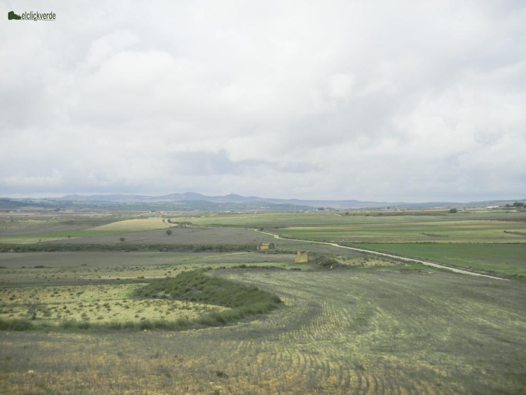 Una zona esteparia, habitat tradicional del sisón común