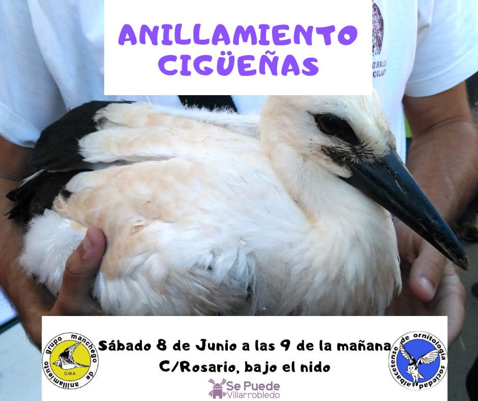 Anillamiento de cigüeñas en Villarrobledo, con SAO