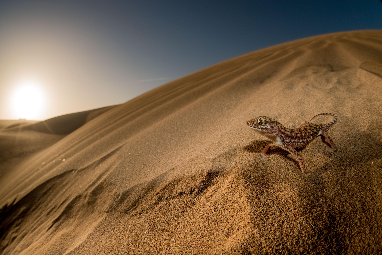 La muestra contiene más de 50 imágenes de la fauna y los habitantes africanos. Imagen: J. Lobón / MNCN