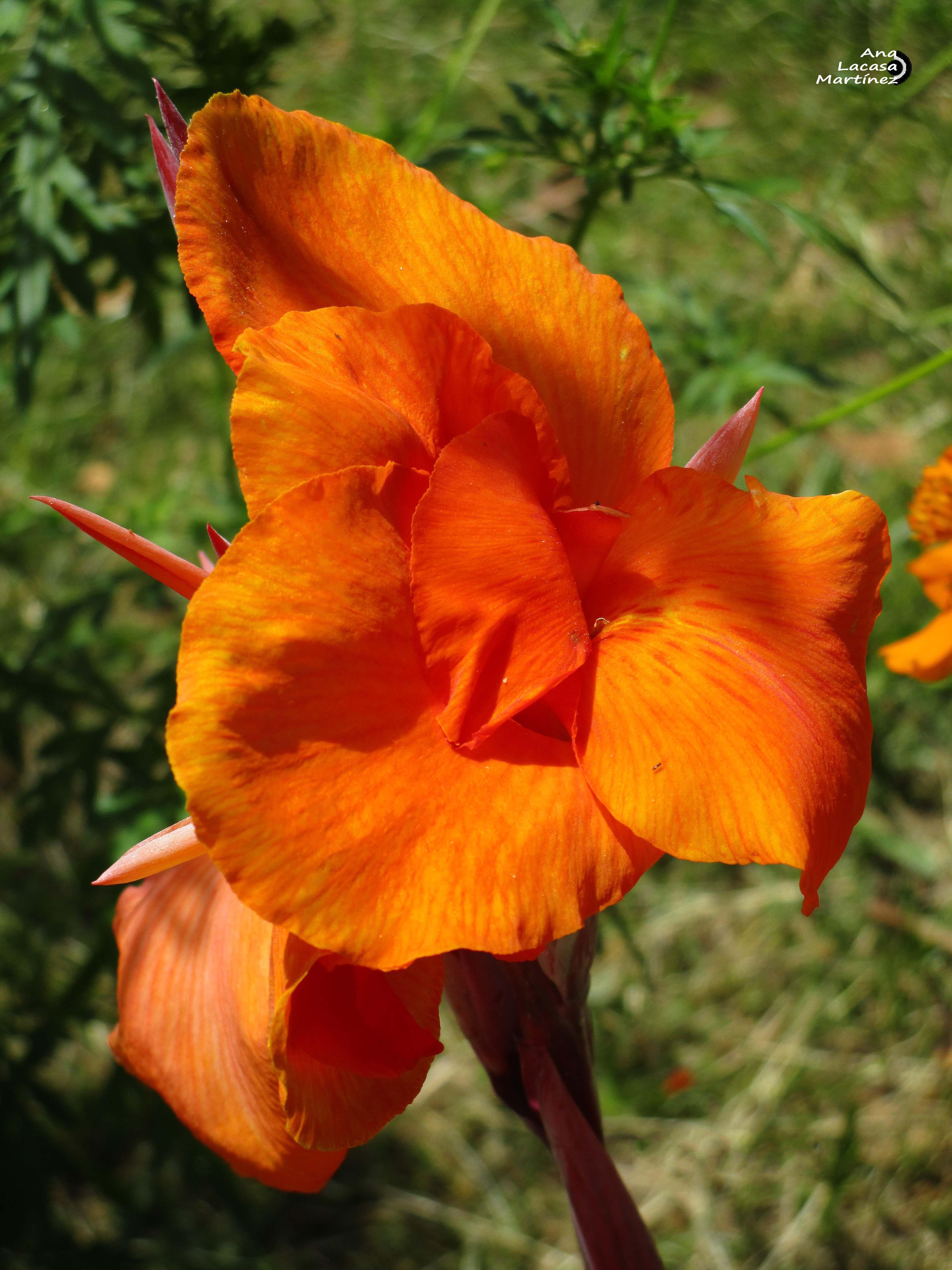 Una bonita flor del parque