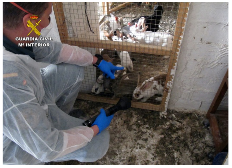 Agentes, ante una jaula con animales rodeada de suciedad. Imagen: Seprona