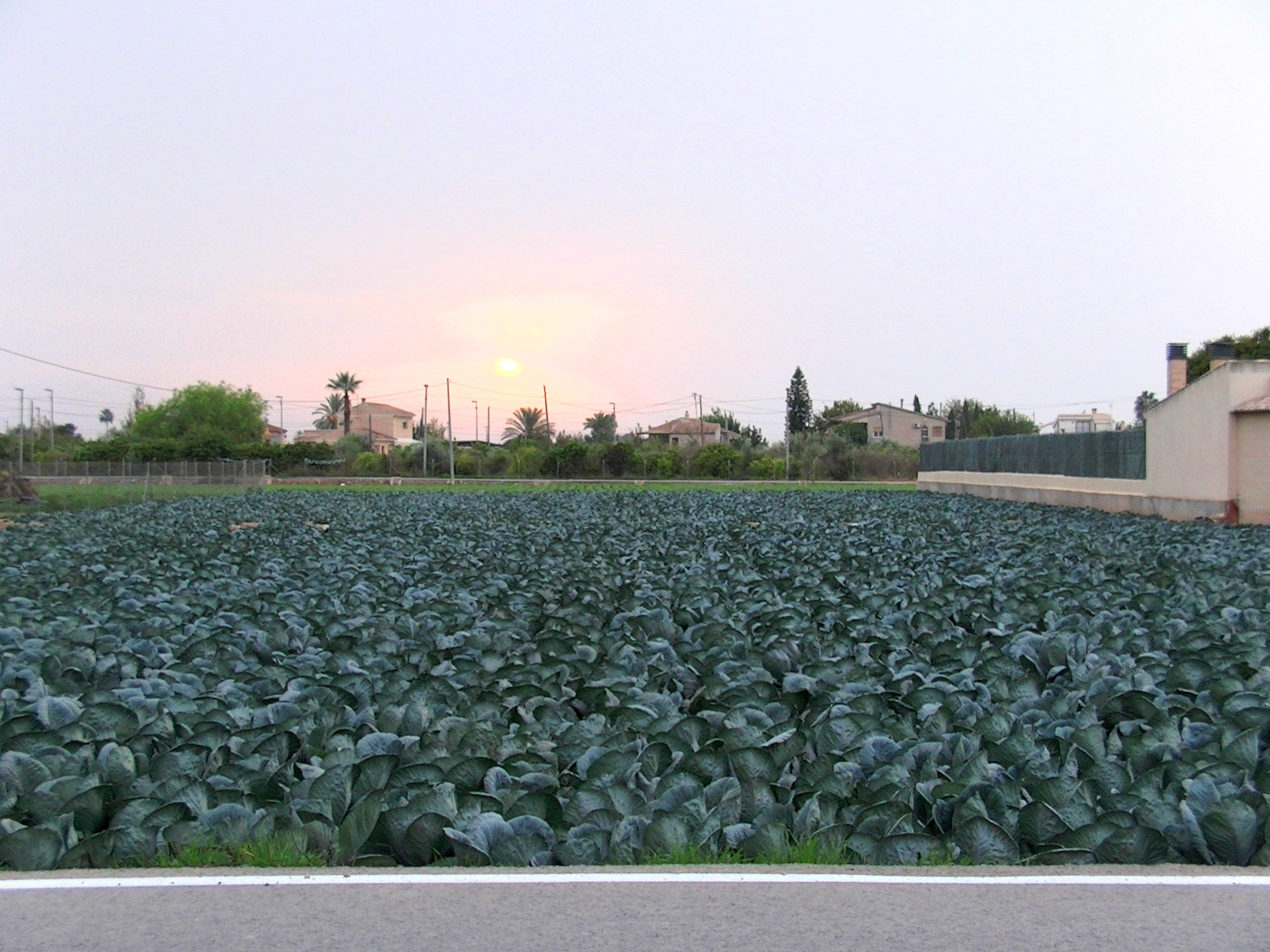 Imagen de la huerta de Murcia. ecv.
