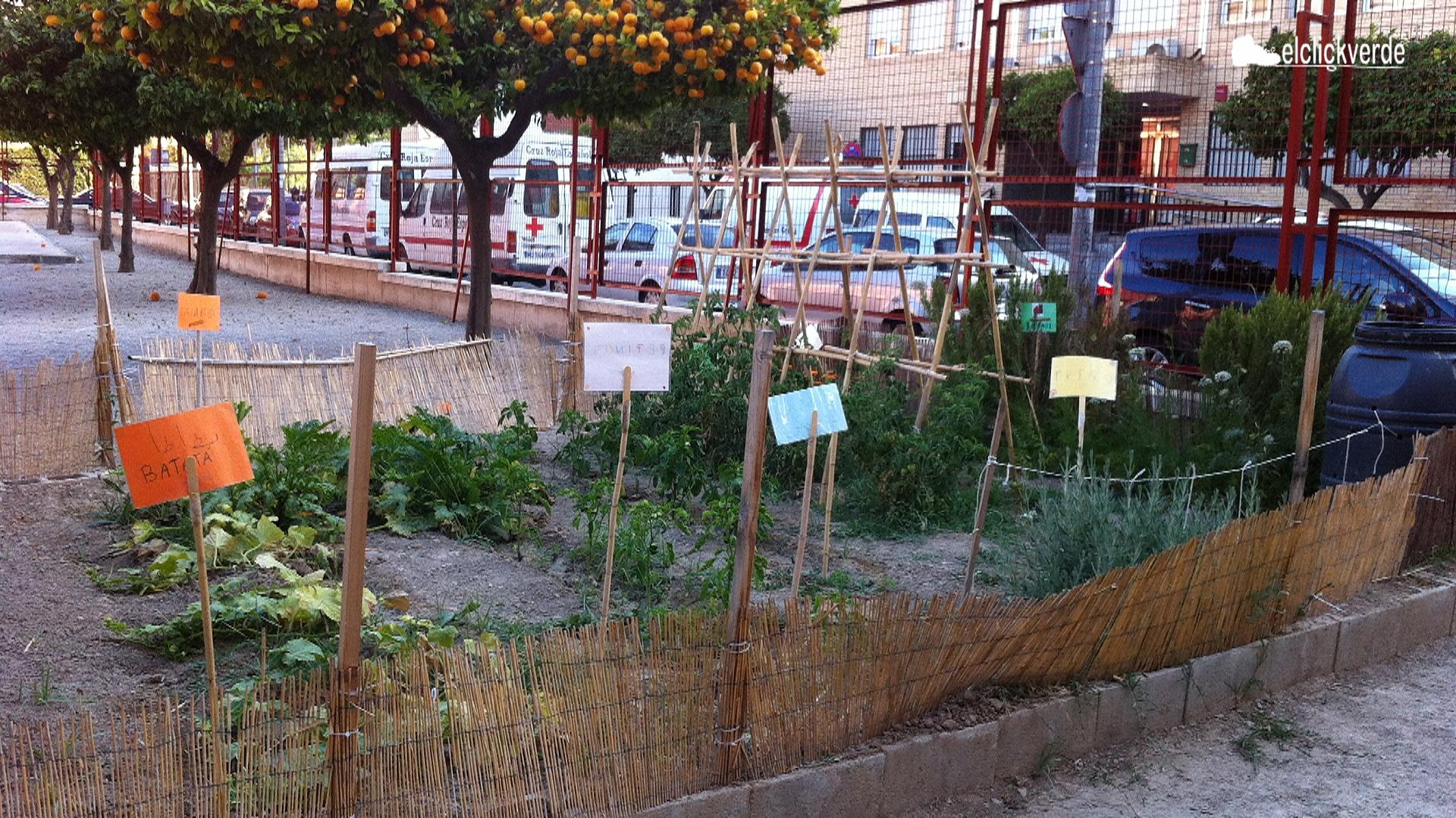 Huerto en un centro escolar de Murcia.
