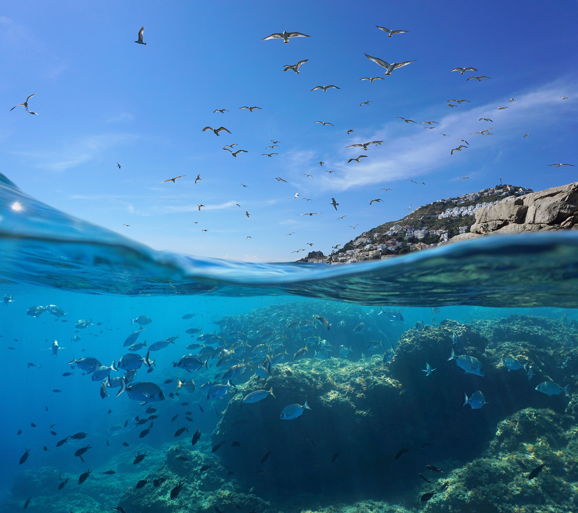 La costa levantina y el mar de Alborán, en España, es una de las zonas cuya conservación resulta clave para recuperar la biodiversidad. Imagen: WWF