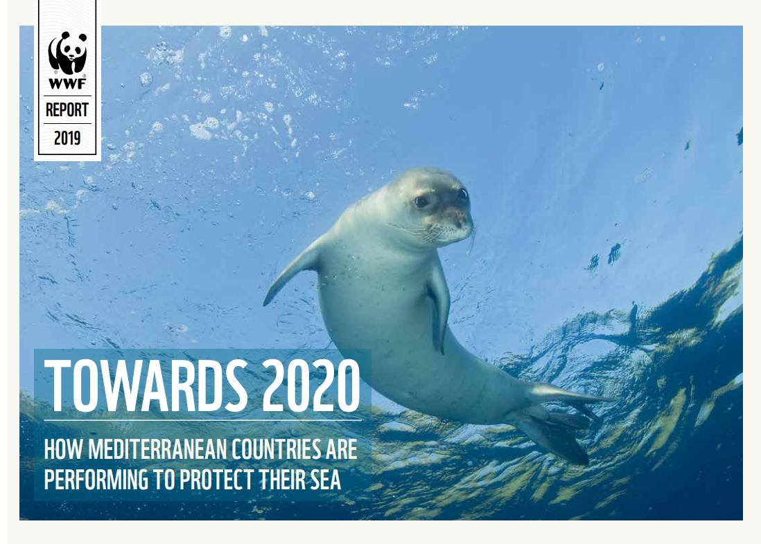 El nuevo informe de WWF recuerda que Tan solo el 1.27% del Mediterráneo está protegido de manera efectiva. Imagen: WWF