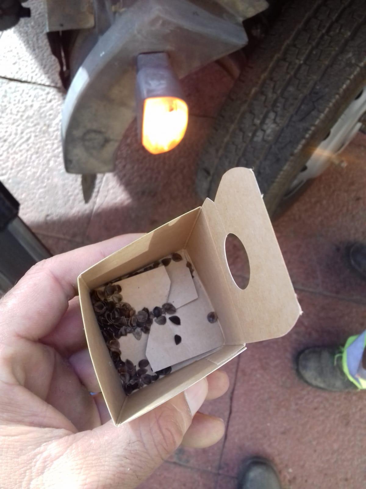 Tamaño de los insectos beneficiosos. En las cajas puede haber larvas, a punto de eclosionar o eclosionadas. Imagen: Ayto. de Murcia