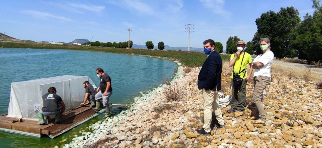 La plataforma flotante lleva vegetación palustre que podrá servir como lugar de cría. Imagen: CARM