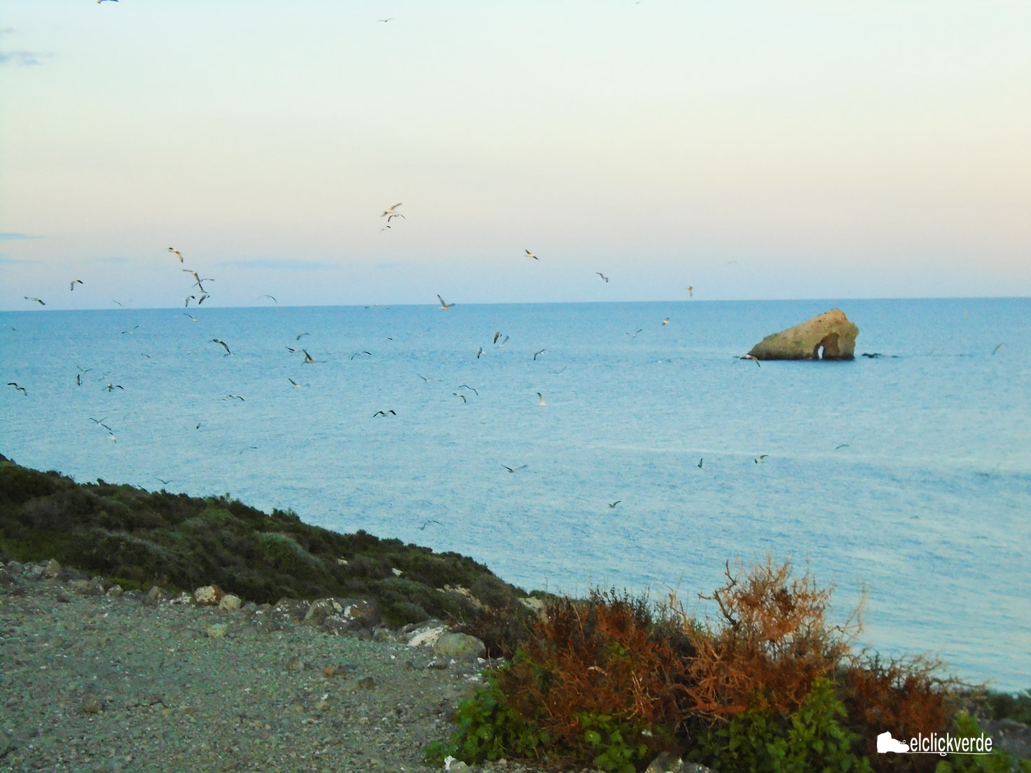 Algunas de las aves que viven o sobrevuelan Isla Grosa.
