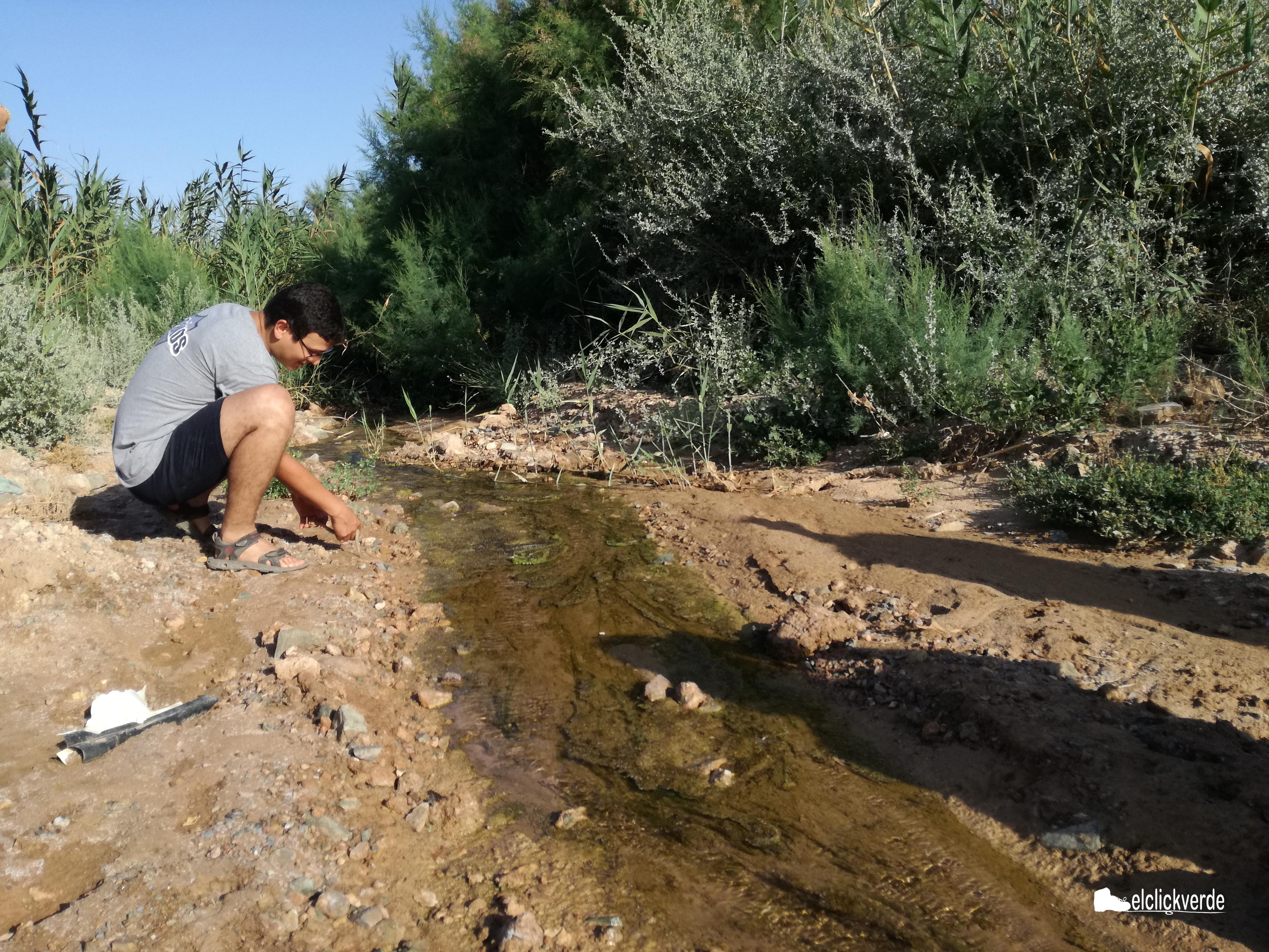 Juan David soltó en el agua a una de las pequeñas viperinas, que se alejó a toda prisa
