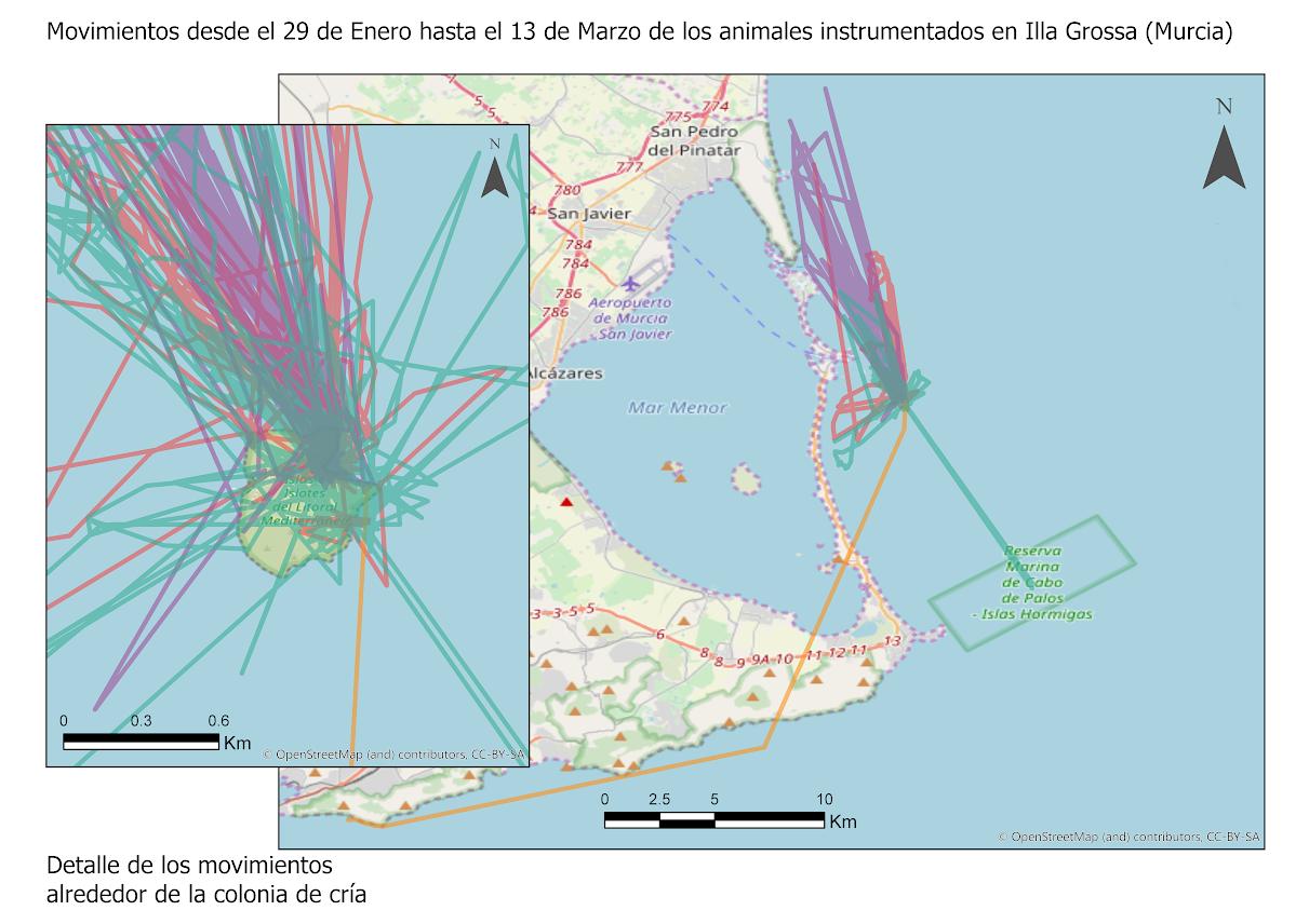 Mapa de movimiento obtenido hasta el momento de los cormoranes marcados en Isla Grosa. Imagen: UA - ANSE