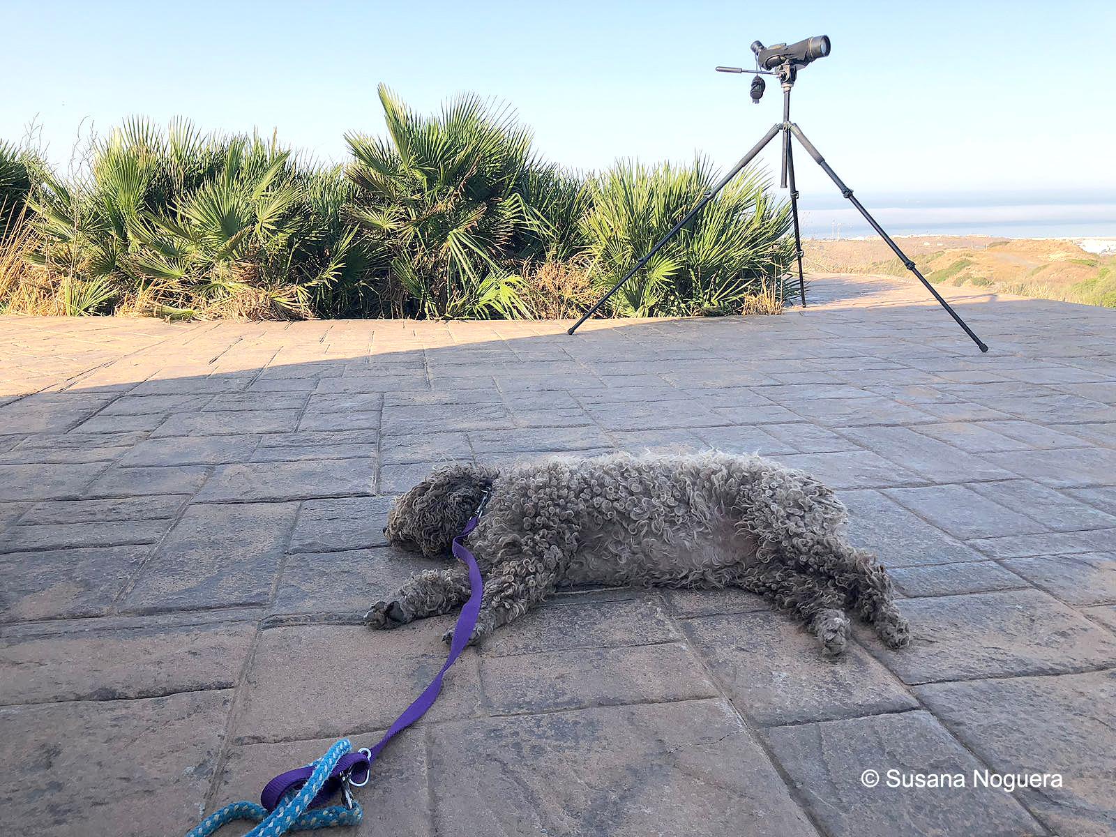 Si tienes perro, también puede observar la migración. Imagen: Susana Noguera
