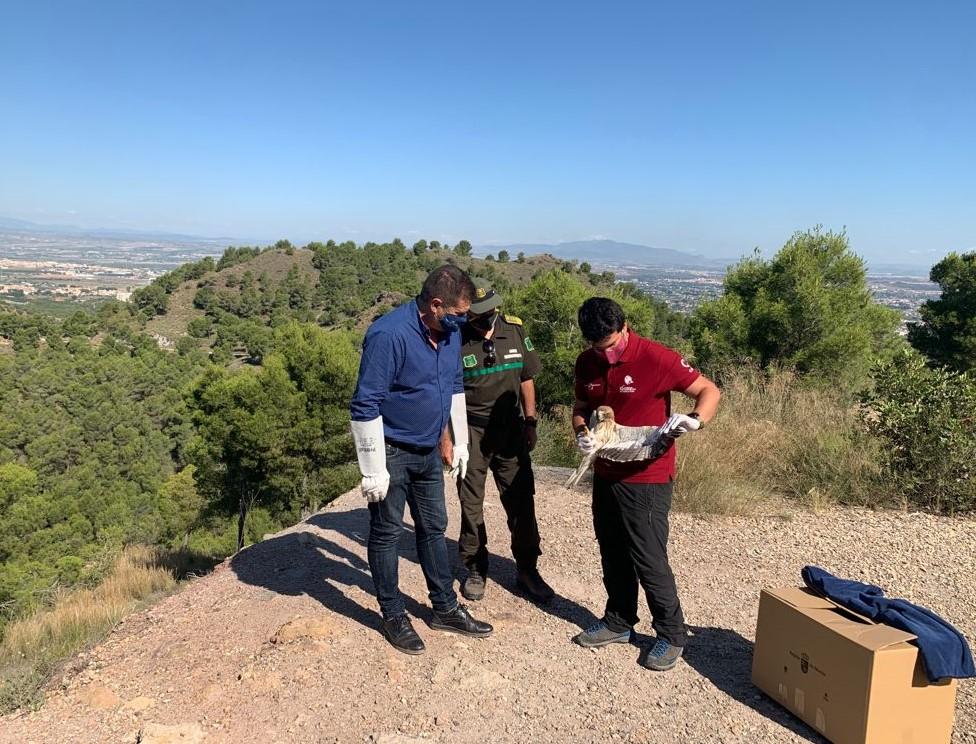 Momento de la liberación de la rapaz recuperada en el CRFS El Valle. Imagen: CARM