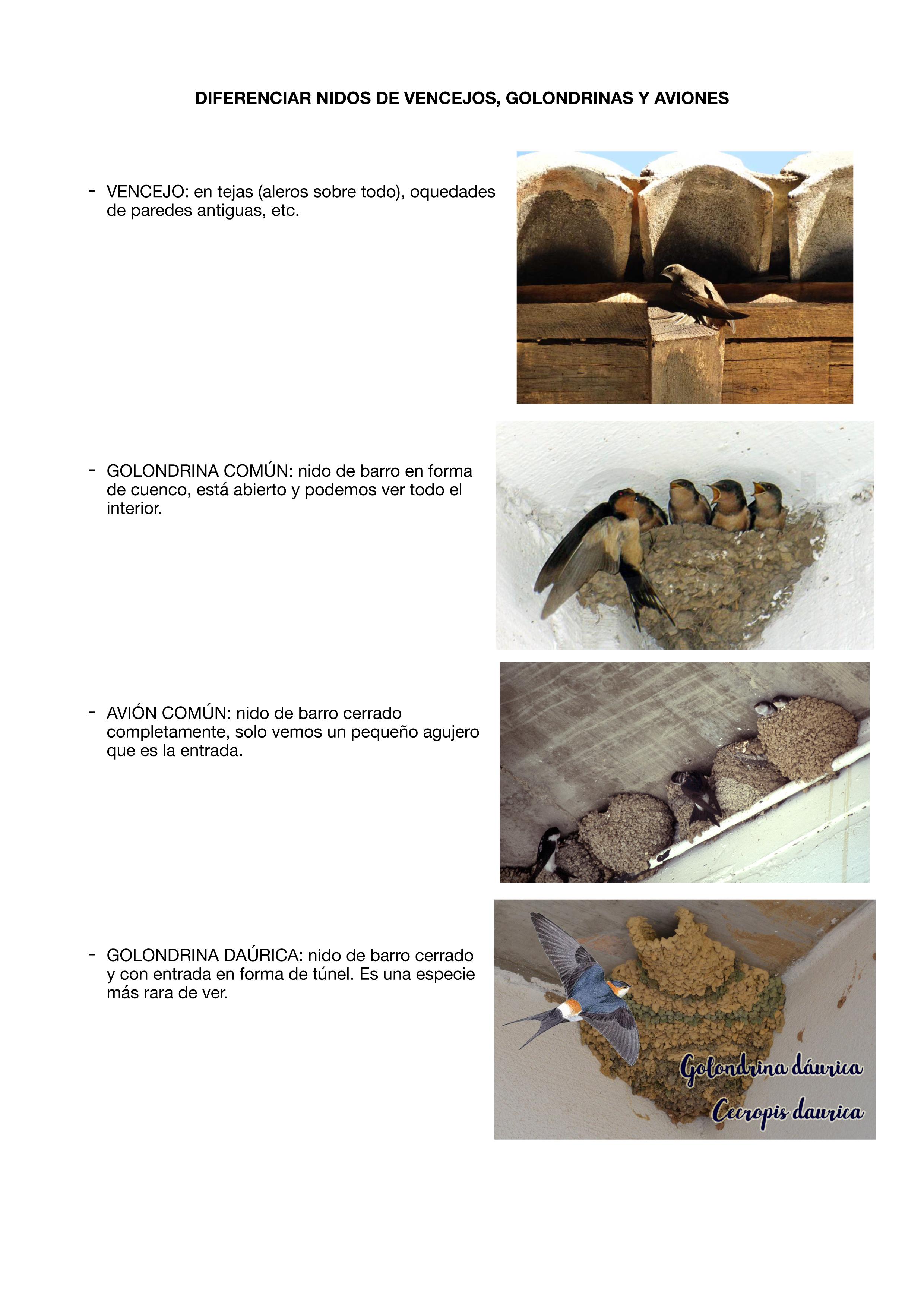 Los distintos tipos de las aves urbanas. Imagen: SOS Vencejos / Anida Yecla
