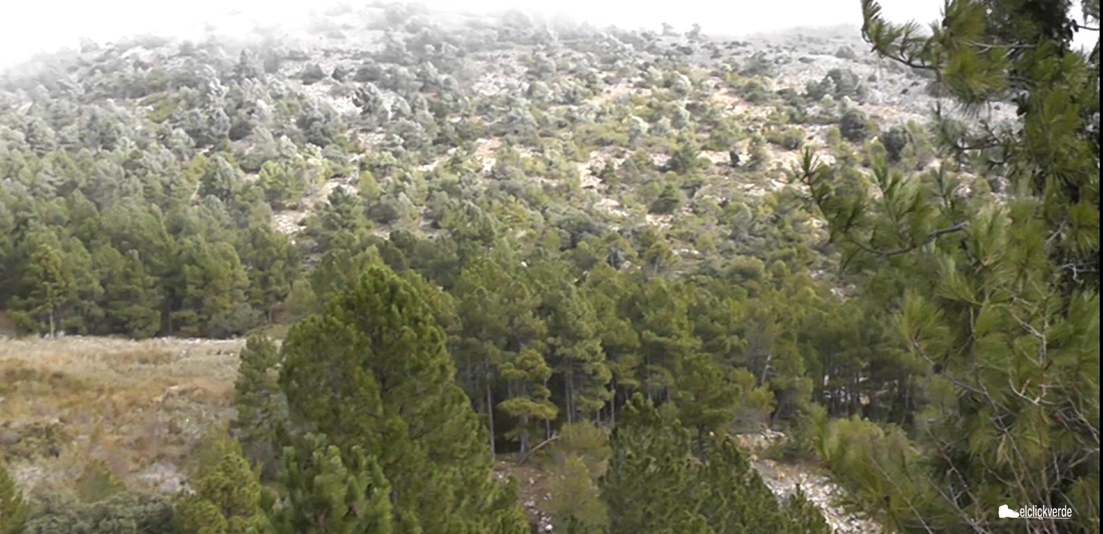 Paisaje de Sierra Espuña coronado por la niebla