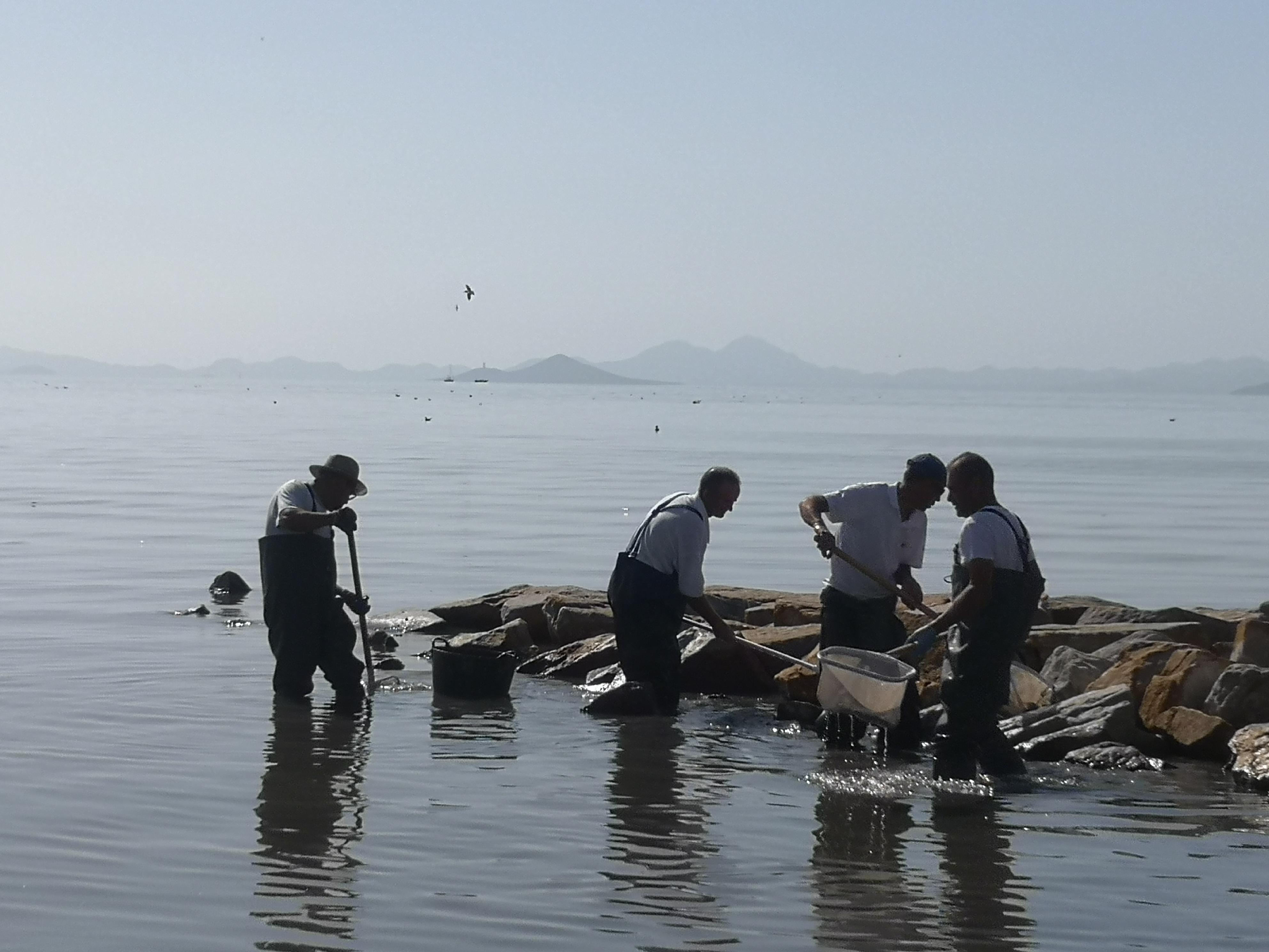 Operarios retirando ejemplares muertos de las orillas del Mar Menor. Imagen: EEA