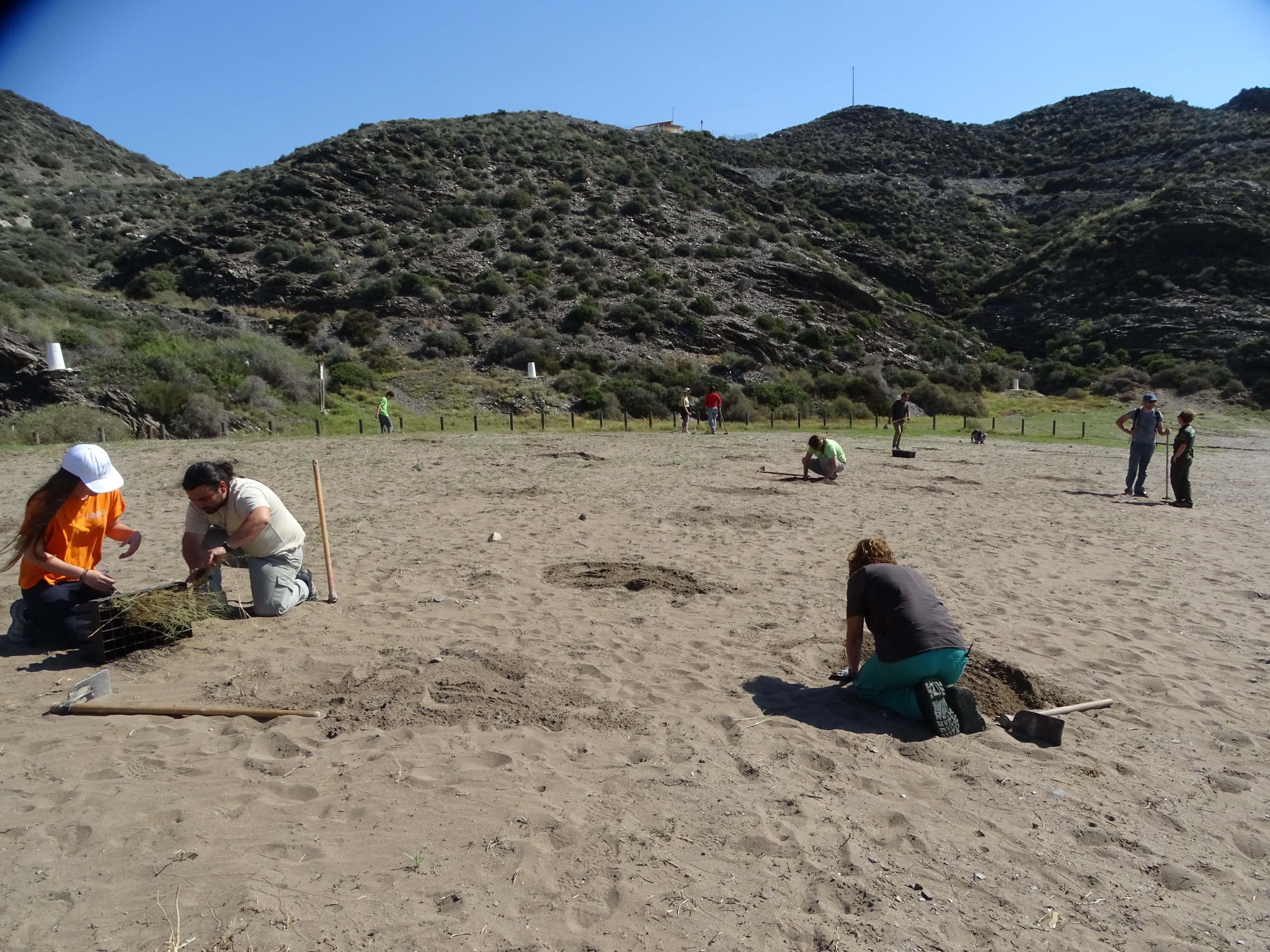 Plantación en la playa de Calnegre. Imagen: ANSE