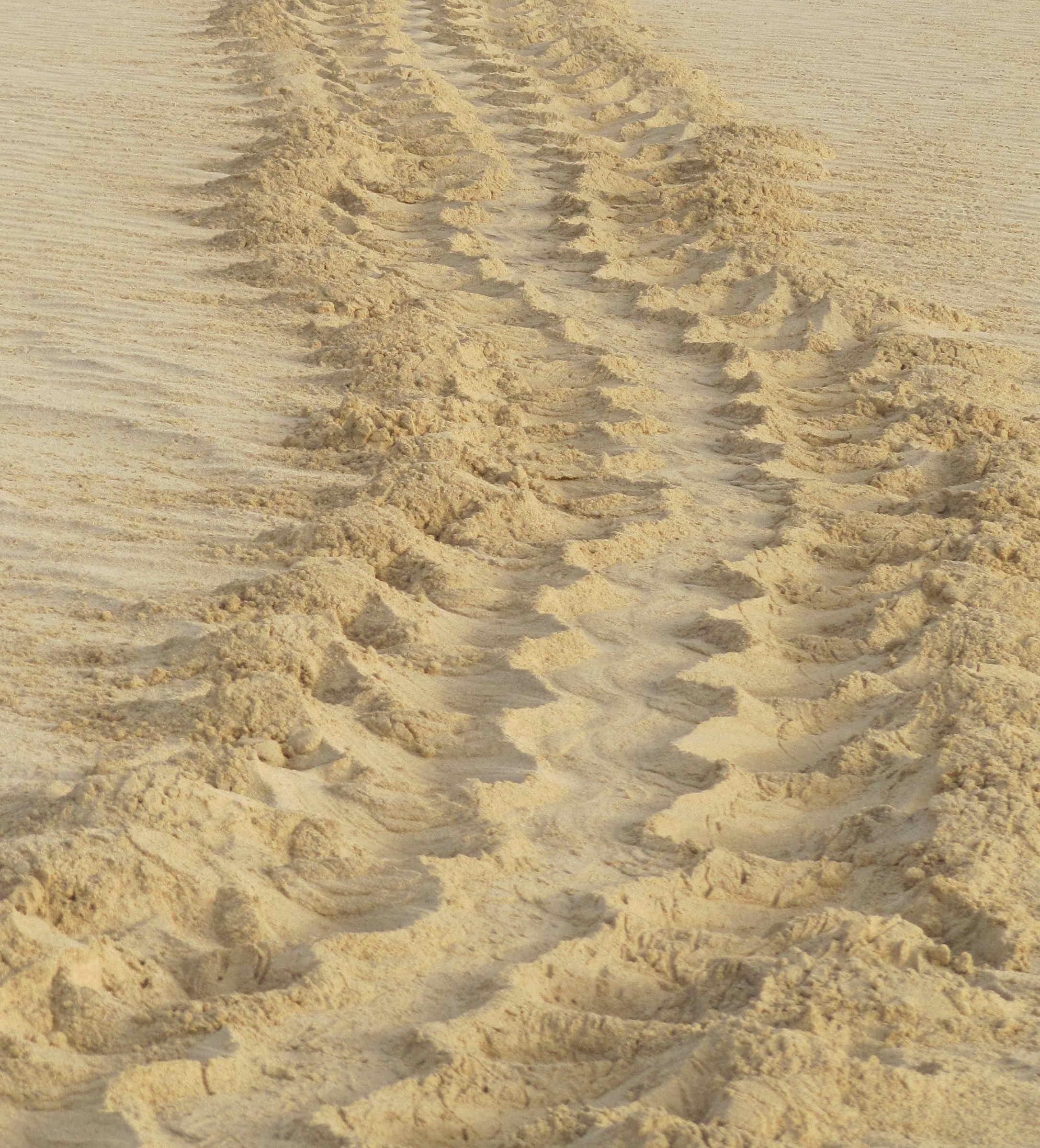 Rastro parcial de tortuga marina. Foto de archivo de la CARM