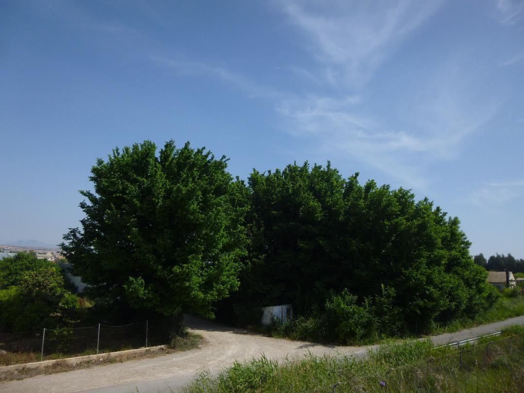 Situación previa de la olmeda desaparecida. Imagen: Huermur