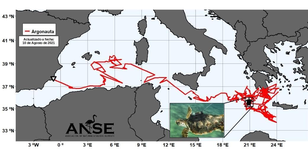 Argonauta ha recorrido más de 5.000 km de mar abierto en el Mediterráneo. Imagen: ANSE