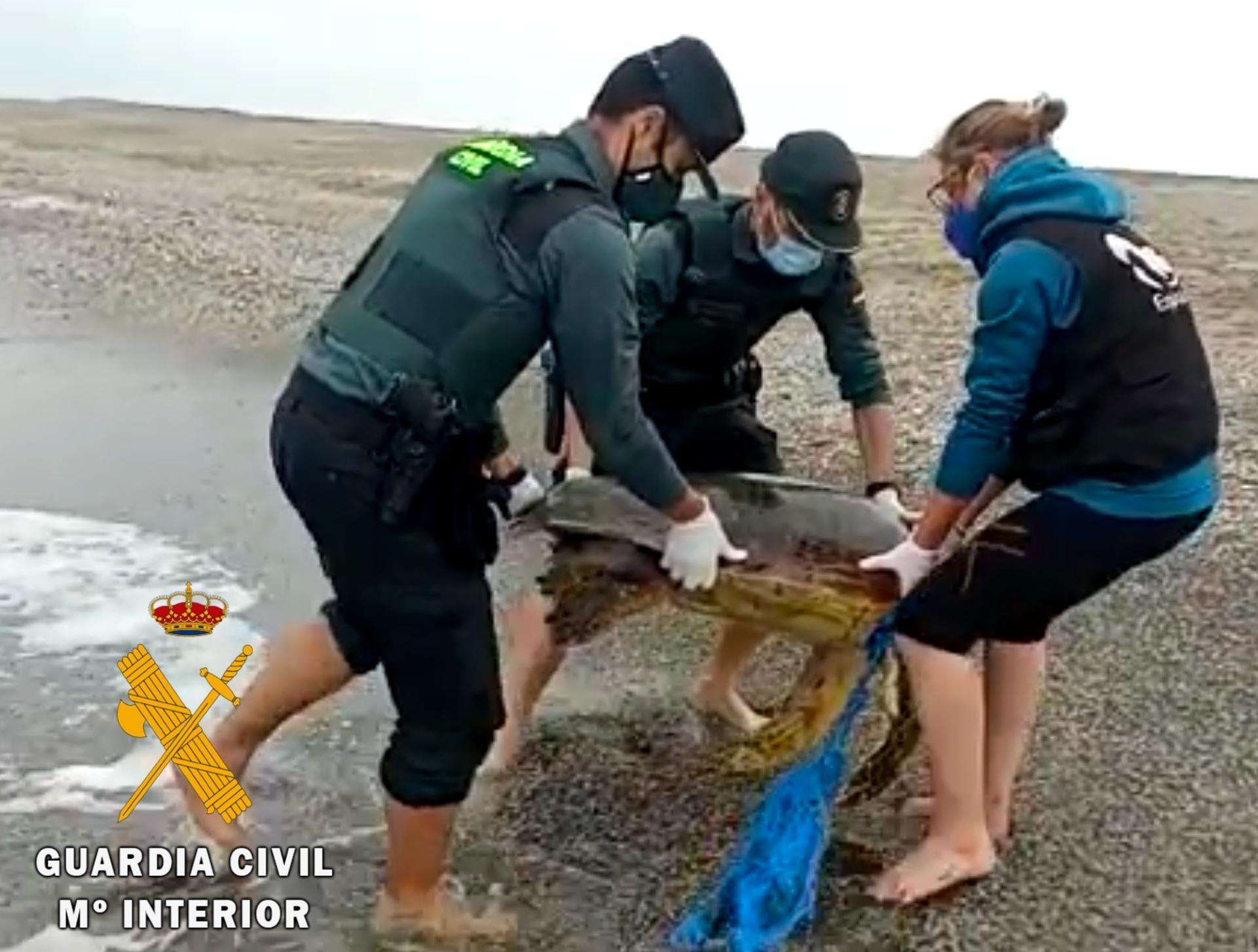 El ejemplar varado, un gran macho adulto y reproductor. Imagen: Guardia Civil de Almería