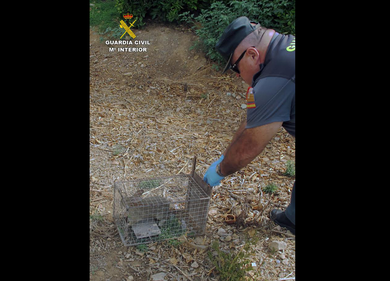 Una de las jaulas, con un conejo dentro, que fue liberado. Imagen: Seprona