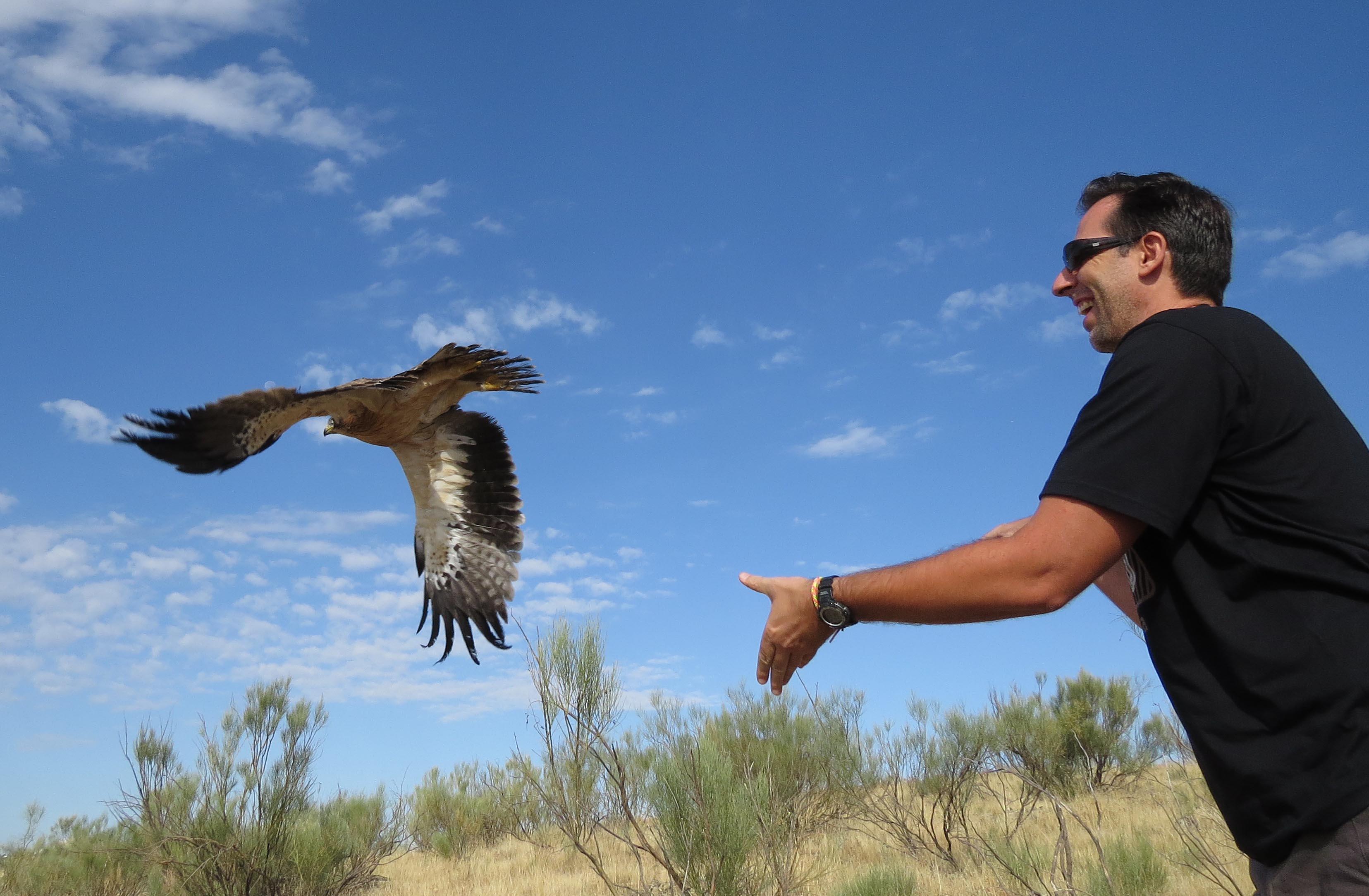 Un águila calzada curada en Grefa es devuelta a la naturaleza por su padrino. Imagen: Grefa