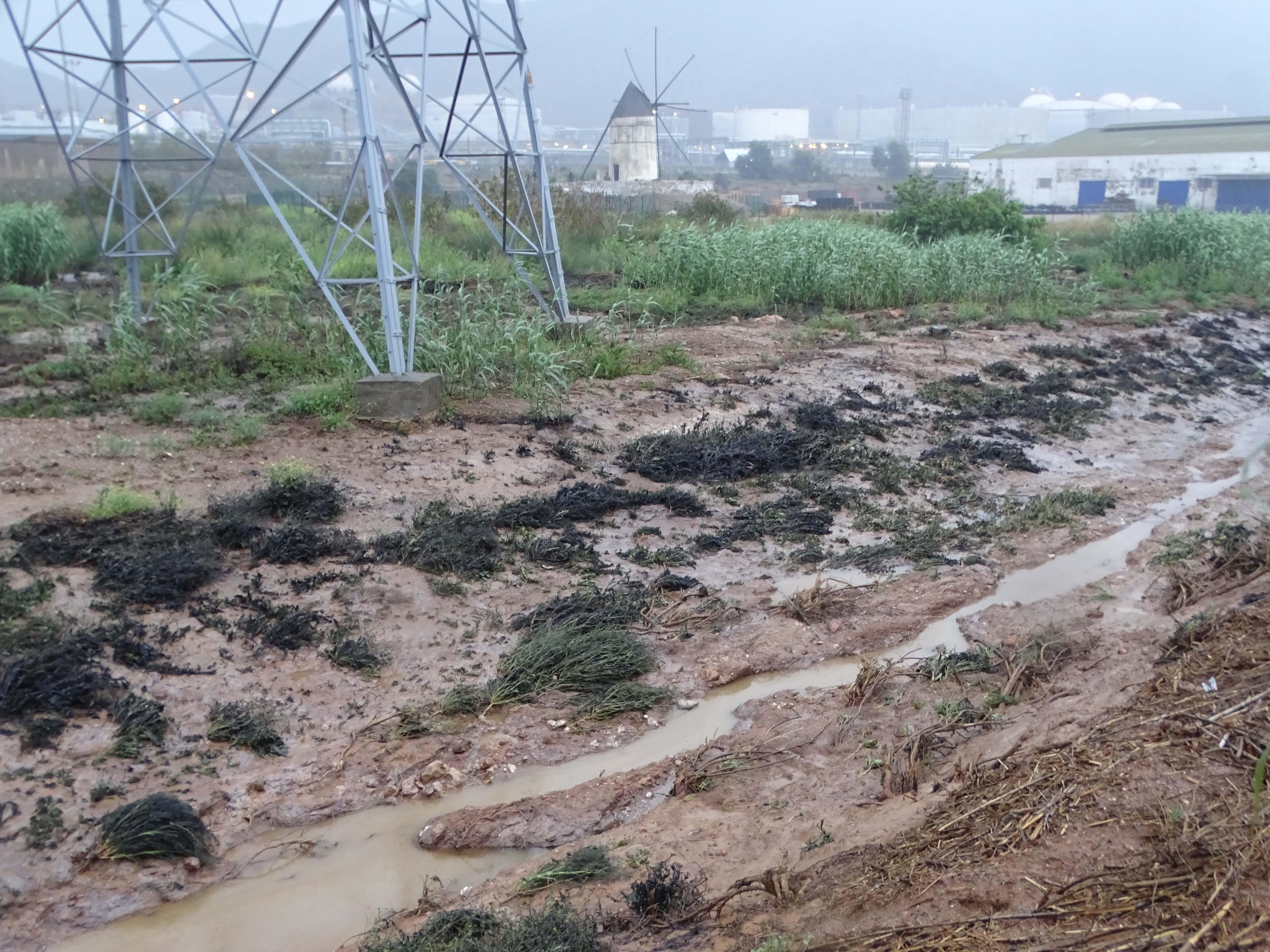 Aspecto que mostraba ayer la vegetación, cubierta con hidrocarburos. Imagen: ANSE