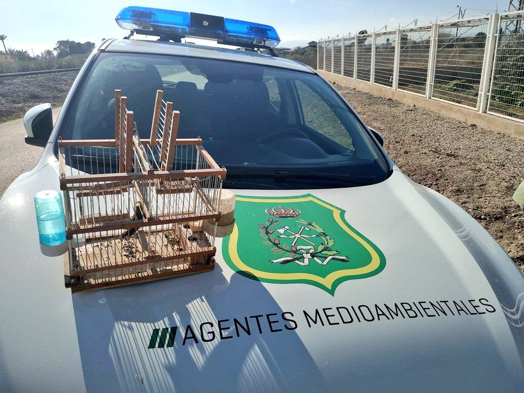 El verdecillo encerrado como reclamo en una jaula. Imagen: Cuenta Oficial de Agentes Medioambientales de la Región de Murcia
